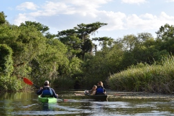 A family from the UK paddling towards the greatest Bald Cypress on the Turner River in Big Cypress National Preserve