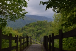 The Smoky Mountains in Tennessee are hard to put into perspective. I took this on top of a pathway during a solo hike.